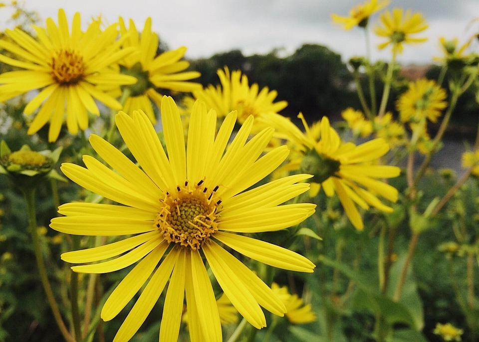 Flowers, Yellow, Yellow Flowers, Summer, Blossom
