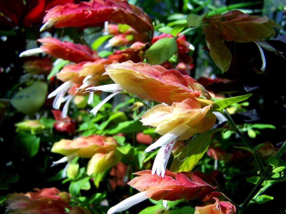 Botanical Garden, Pecs, Yellow-pink Plant