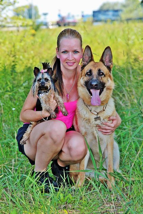 Woman, Dogs, Yorkie, German Shepherd