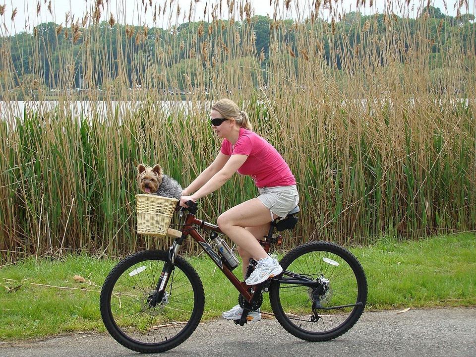 Girl, Bike, Lake, Grass, Animal, Dog, Yorkie, Terrier