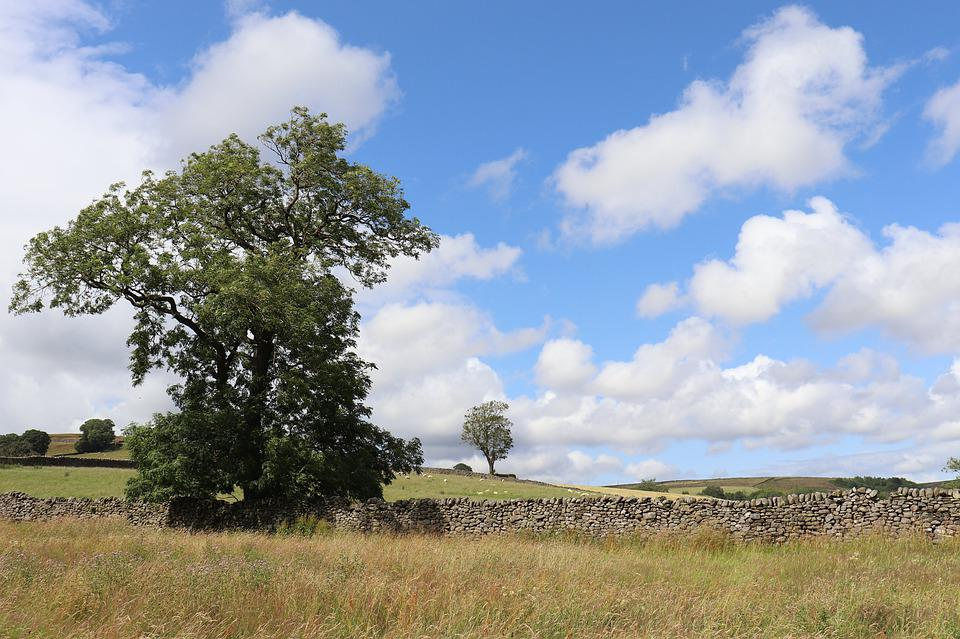 Hike, Yorkshire, Dales, Yorkshire Dales, Hill, Tree