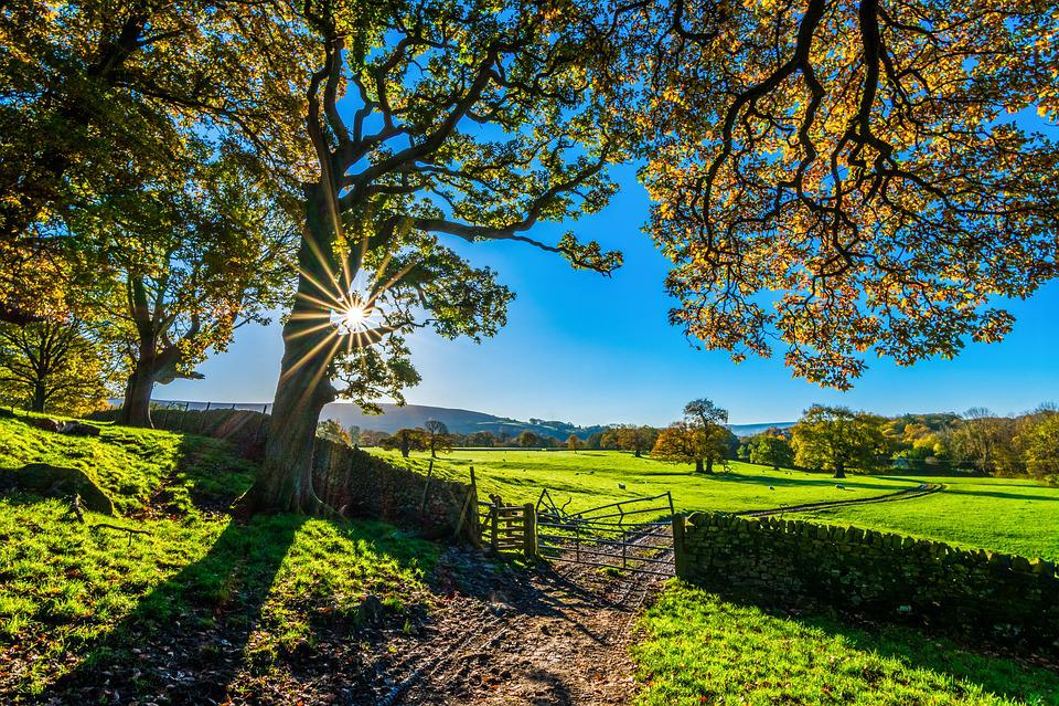 Yorkshire, Autumn, Sunshine, Bolton Abbey, Morning