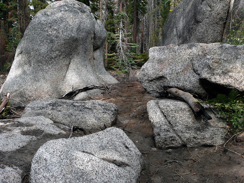 Rocky, Forest, Yosemite National Park, California, Usa