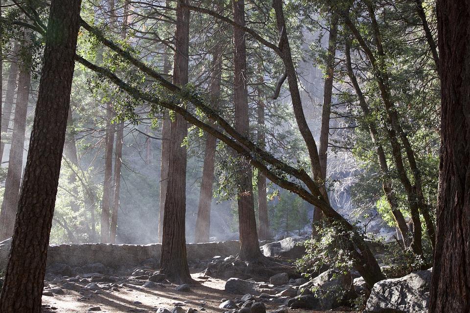 Yosemite, Falls, Park, California, National, Nature