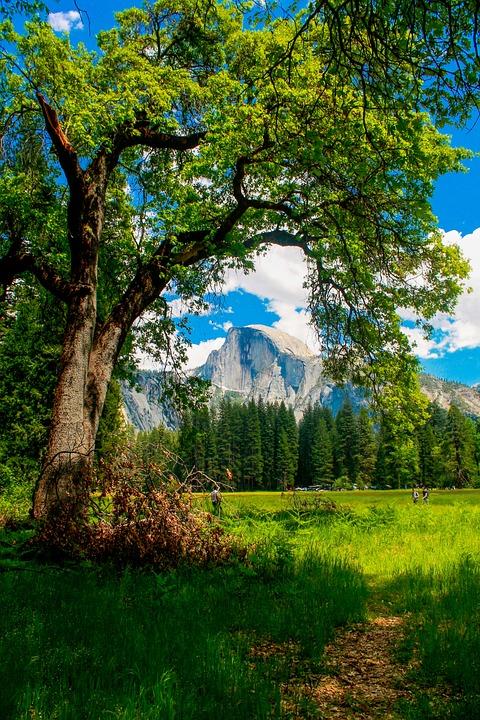 Half Dome, Yosemite, California, Dome, Park, Valley