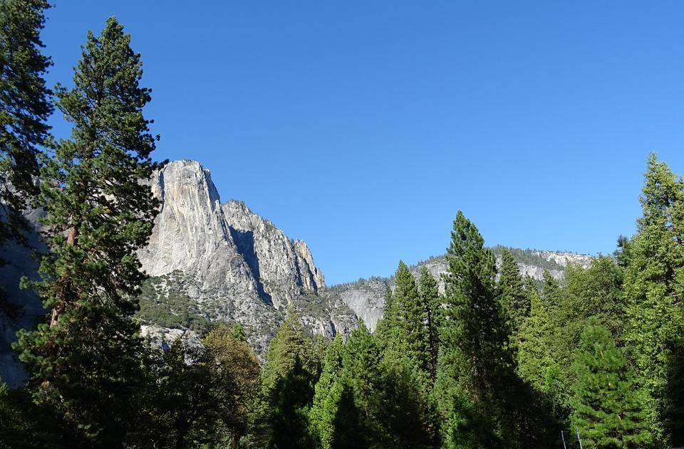 Valley, Vegetation, Incense Cedar, Yosemite