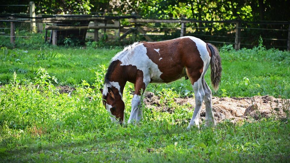 Horse, Foal, Animal, Pasture, Young Animal, Mammal