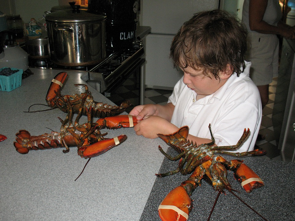 Lobsters, Young Boy, Scituate, Little, Boy, Child