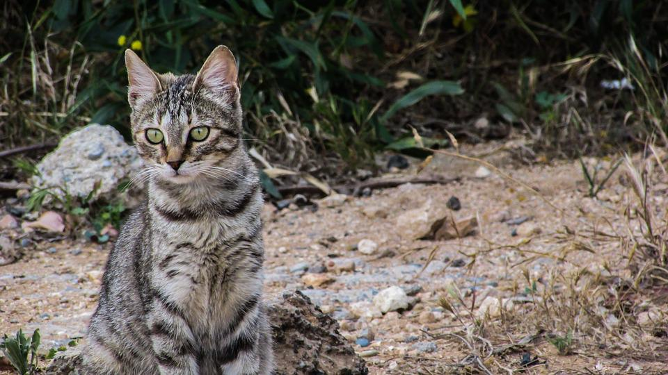 Cat, Stray, Cute, Young, Kitty, Adorable, Watching