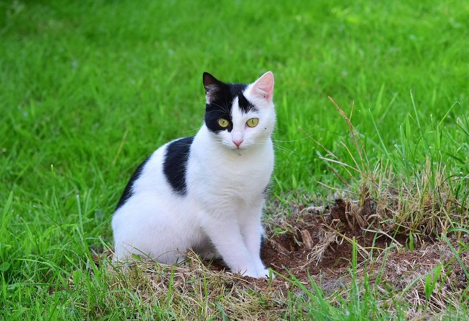 Cat, Young Cat, Domestic Cat, Pet, Curious, Animal