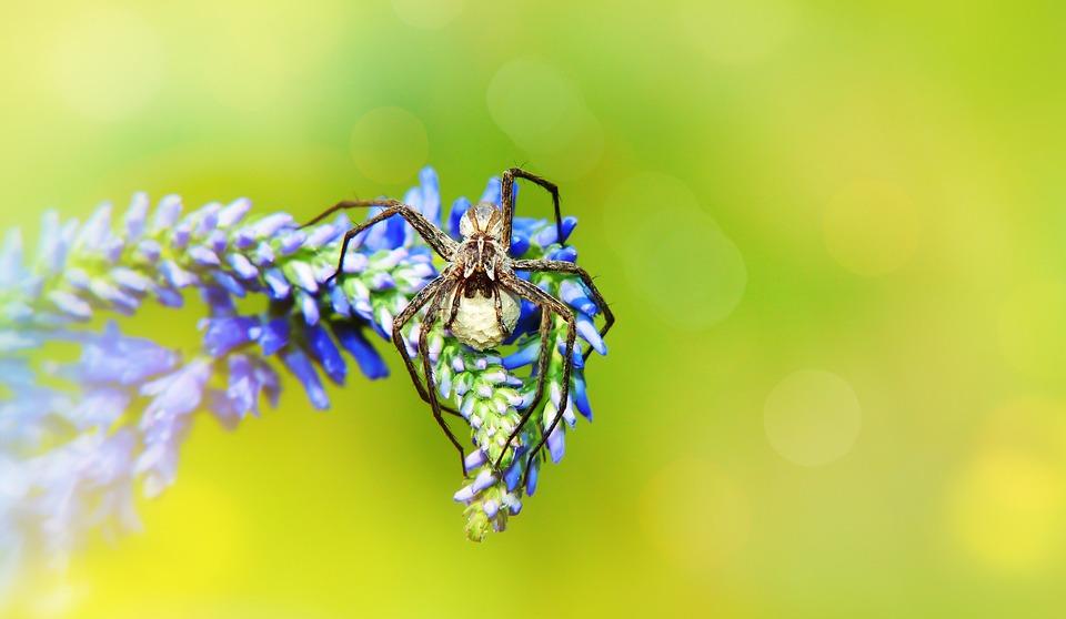 Darownik Wonderful, Cocoon, Spider, Female, Young, Egg