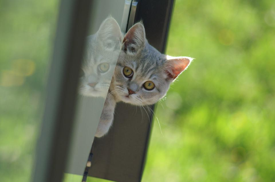 Animal, Cute, Cat, Nature, Young
