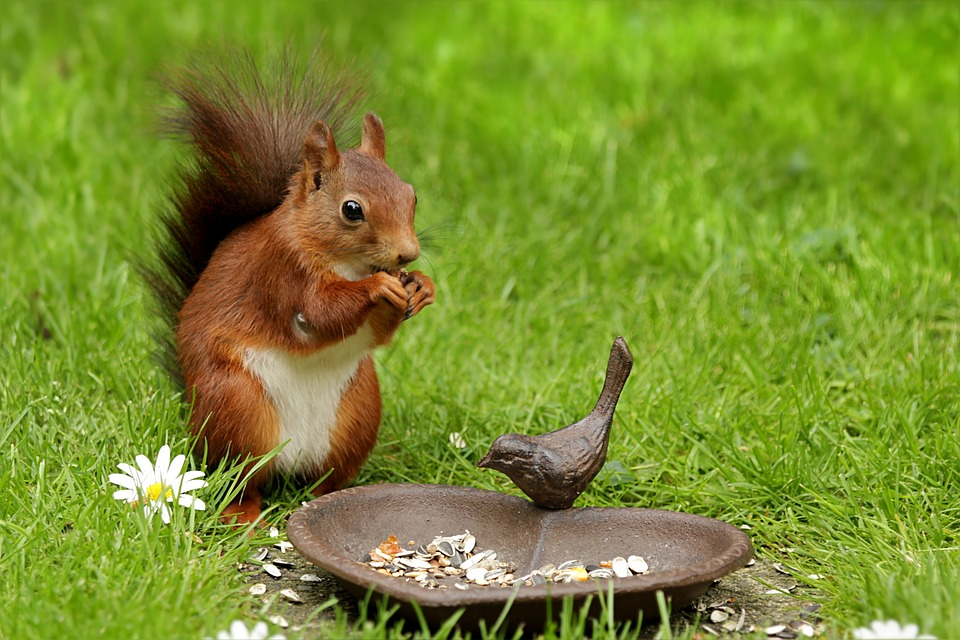 Squirrel, Animal, Sciurus, Young, Spring, Chucks