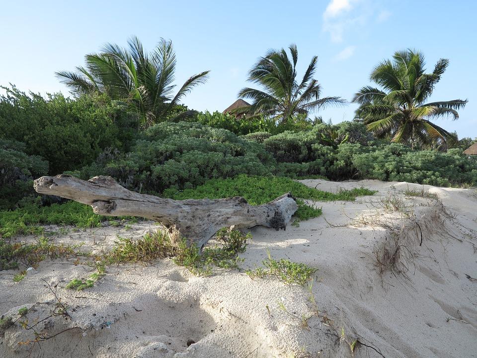 Yucatan, Palms, Beach