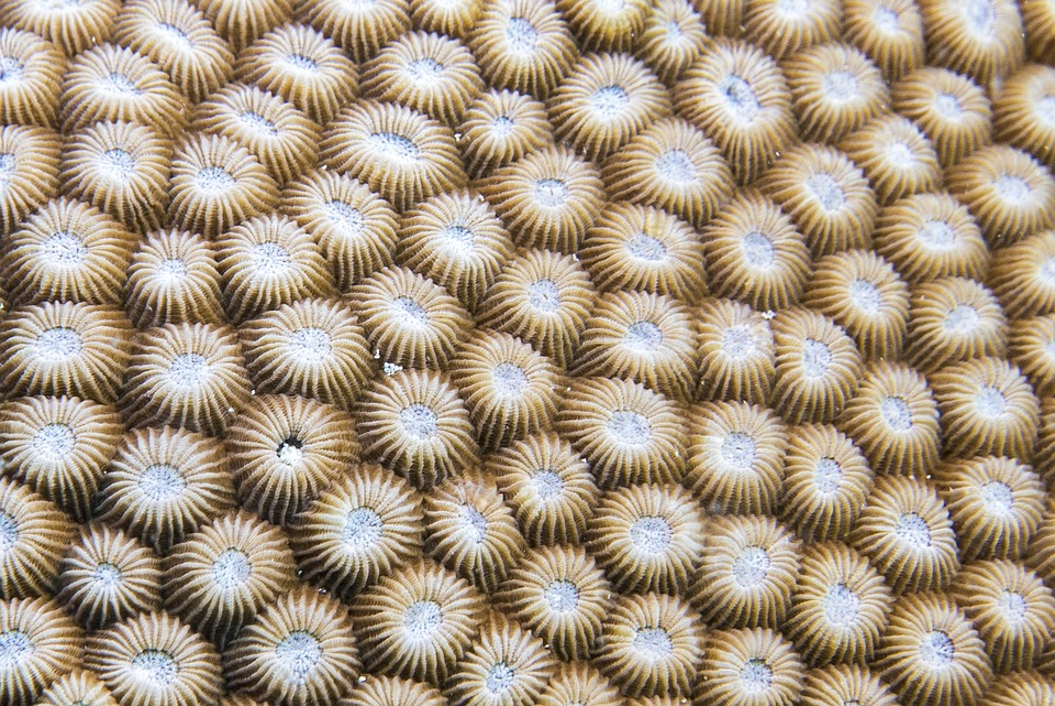 Anemone, Diving, Zanzibar, Africa, Sea
