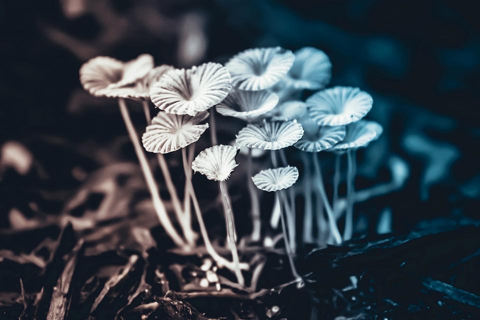 Flower, Nature, Spring, Flowers, Zen, Summer, Plants