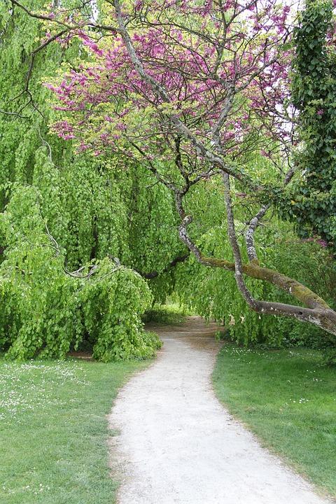 Garden, Path, Nature, Gardening, Park, Lawn, Zen