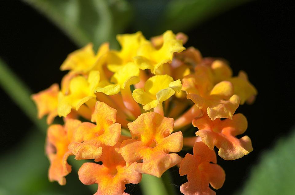 Flower, Nature, Spring, Zen, Summer, Plants, Romantic