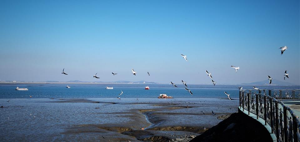Sea, Seagull, Tidal, Sky, Cloud, Blue, Zheng, Birds