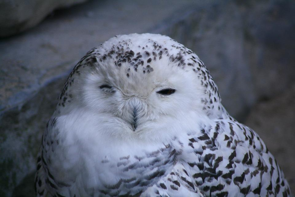 Bird, Owl, Close, Animals, Zoo