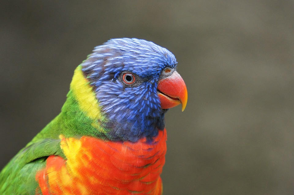 Parrot, Bird, Zoo, Animals