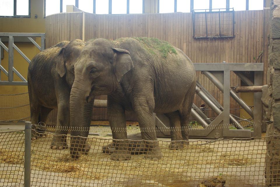 Elephant, Zoo, Animals, Nature, Safari, Mammal, Africa