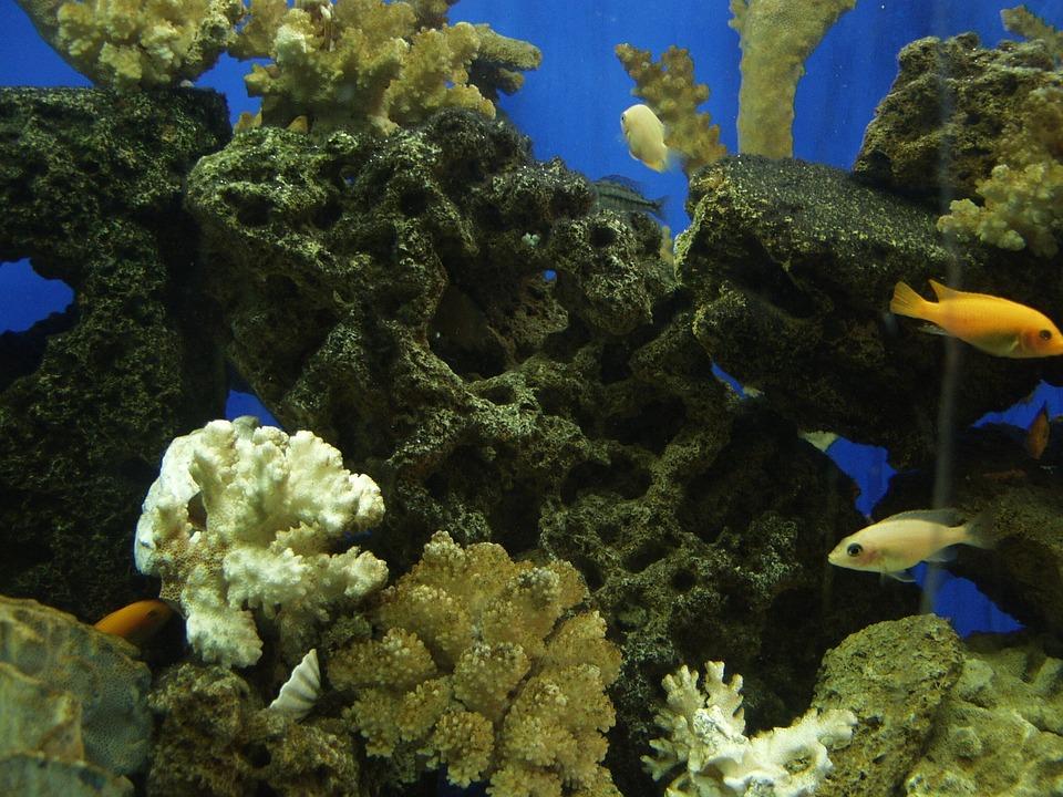 Zoo, Kharkov Zoo, Kharkov, Fish, Aquarium, Corals, Weed