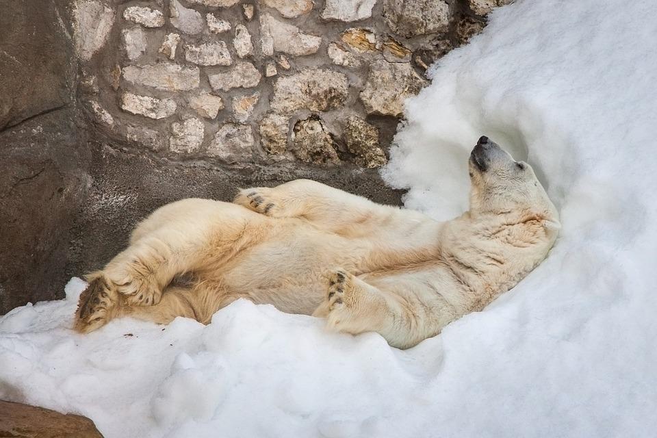 Bear, White, Zoo, Snow, Bliss