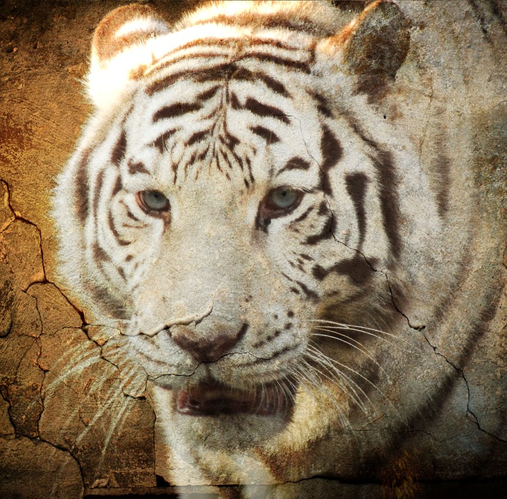 Tiger, Surreal, Painting, Predator, Animal, Zoo, Feline