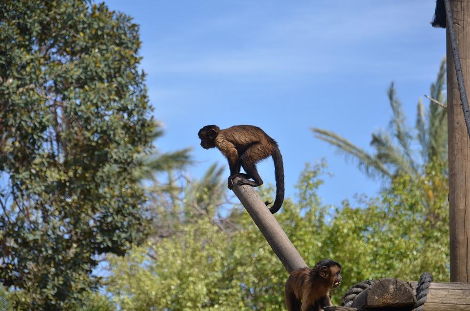Monkey, Sky, Tree, Zoo