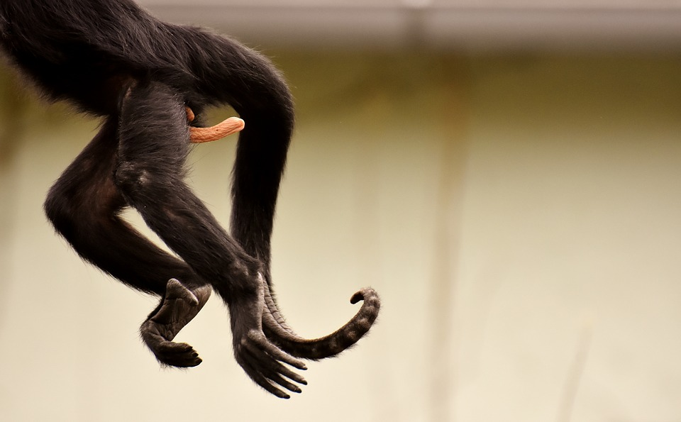 Am Gone, Funny, Monkey, Zoo, Tierpark Hellabrunn