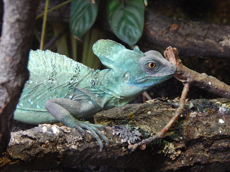 Lizard, Zoo, Deep, Animal, Colors, Reptile