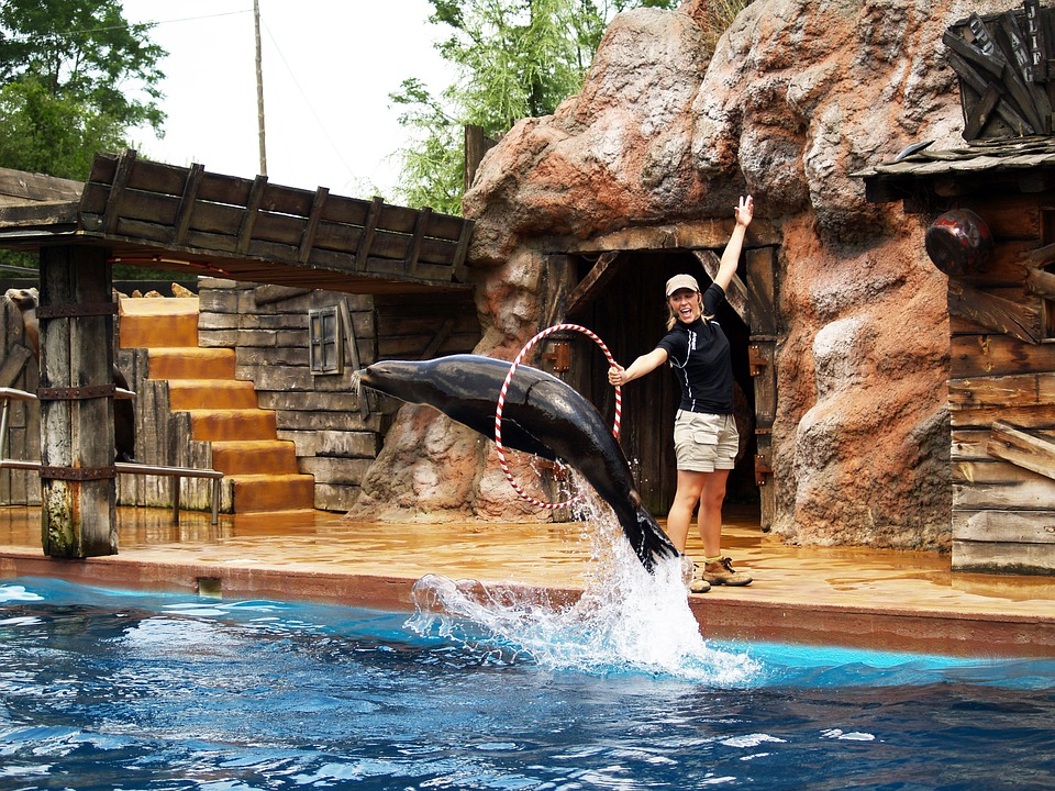 Seal, Acrobatics, Water Park, Zoo