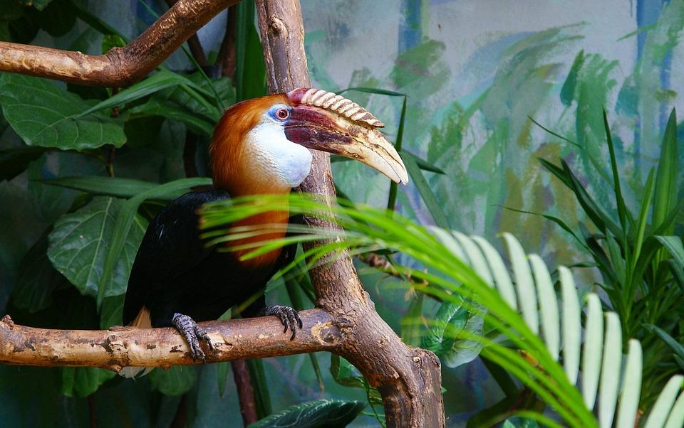 Bird, Toucan, Zoo, Warsaw
