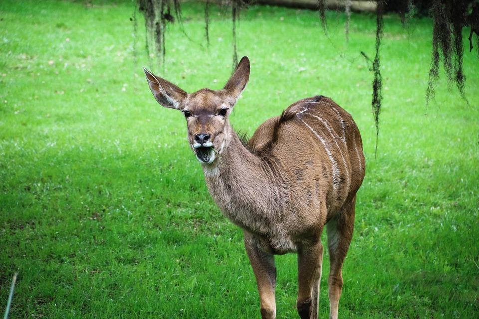 Deer, Park, Zoo, Nature, Wild, Ave, Fauna, Pond