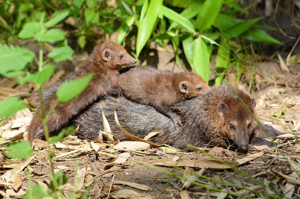 Weasel, Family, Animals, Wildlife, Wild, Zoology
