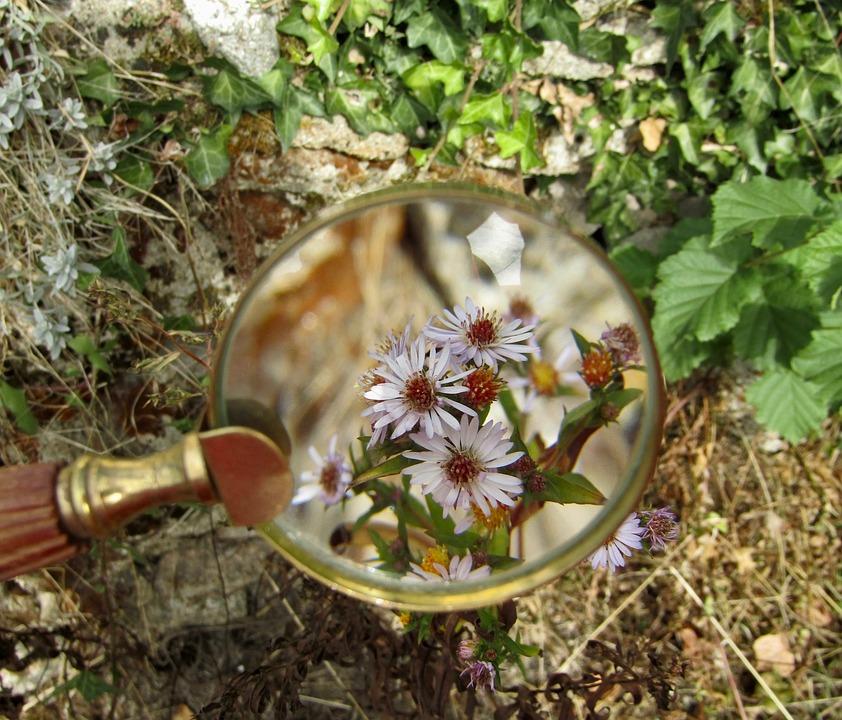 Magnifying Glass, Flowers, Macro, Zoom, Garden