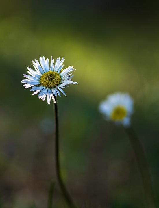 Flower, Field, Nature, Zoom, Plant, Flora