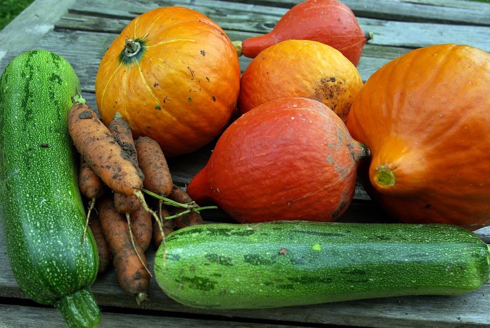 Pumpkin, Zucchini, Carrot, Hokaidokuerbis, Harvest