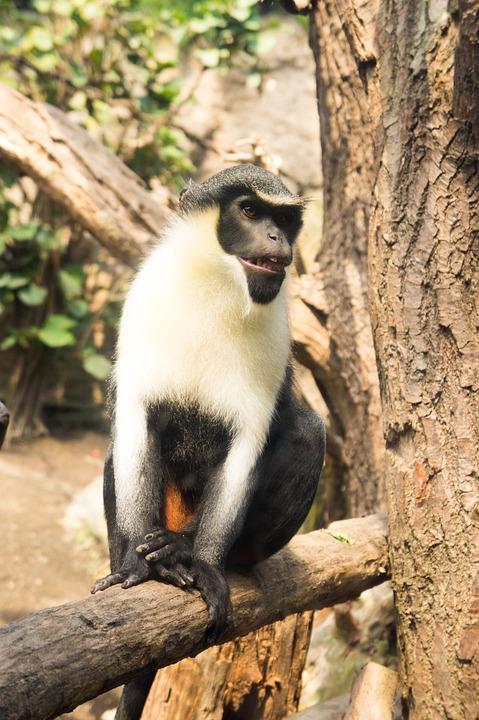 Monkey, Tree, Fur, Animal, Zoo, Nature, äffchen, Hell