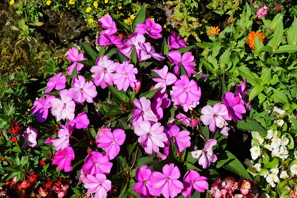 Flowers, Green, Plant, Botanical Garden, überlingen