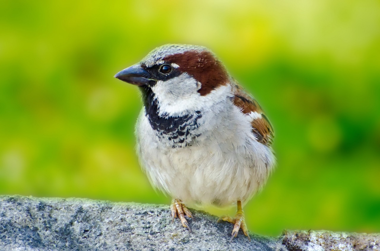essay on bird sparrow March 20 is world sparrow day here are some ideas to help you do your bit for the little bird.