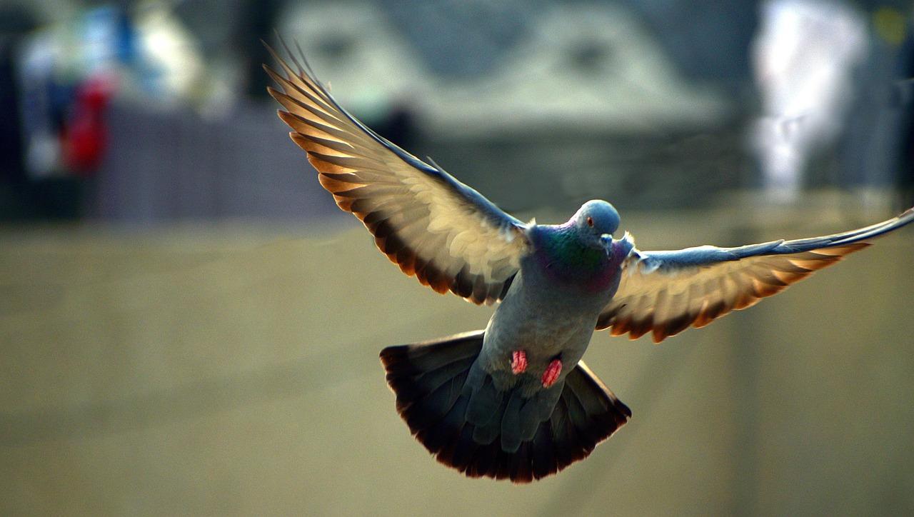 bird wings spread - 1280×724