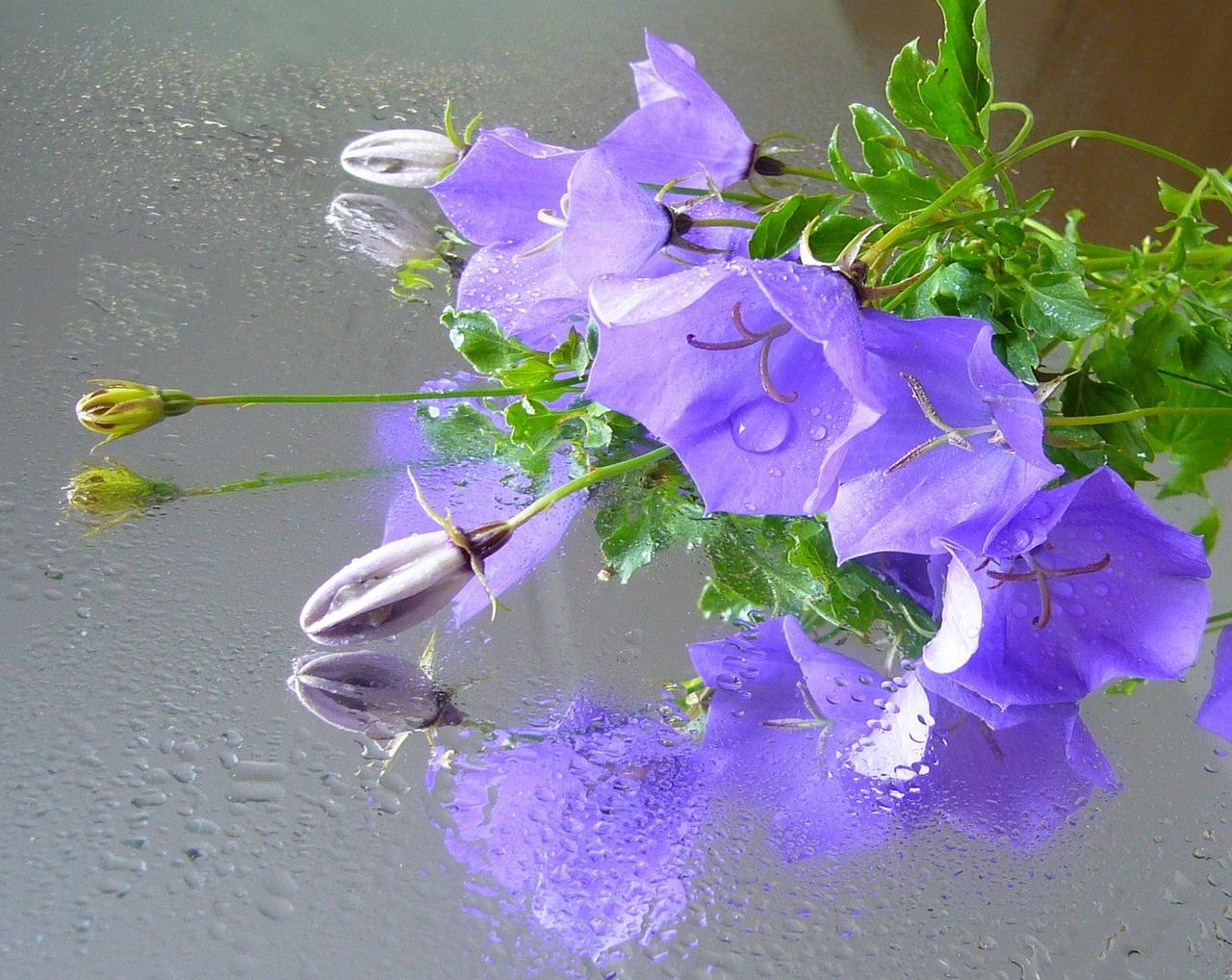 Днем, открытка цветы в воде