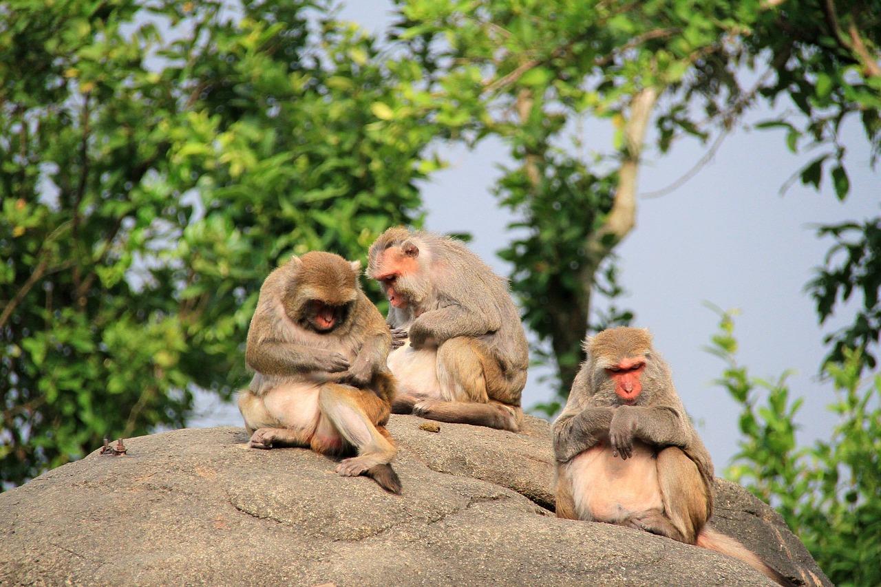 Картинка с тремя обезьянами