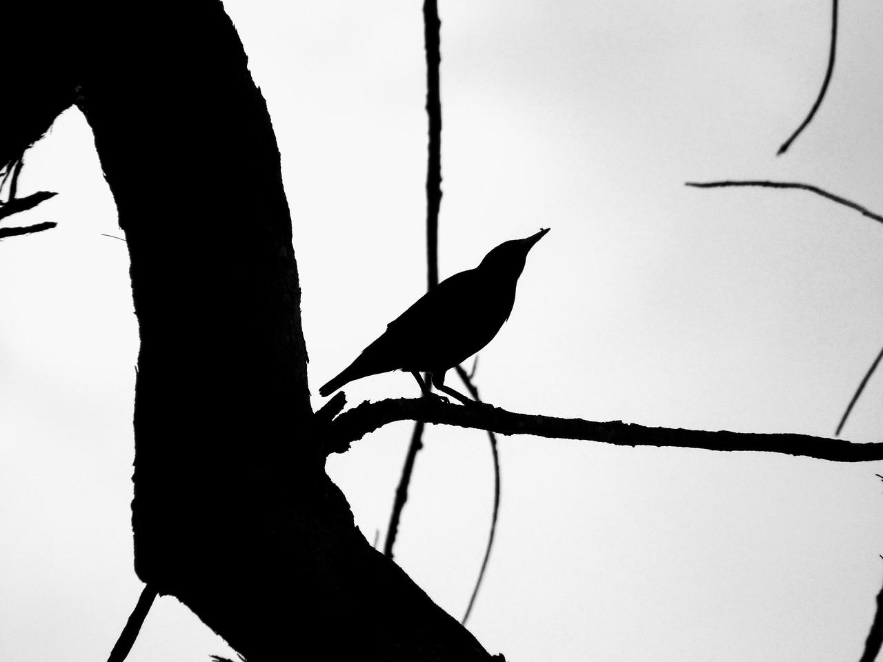 louisiana silhouette on black background