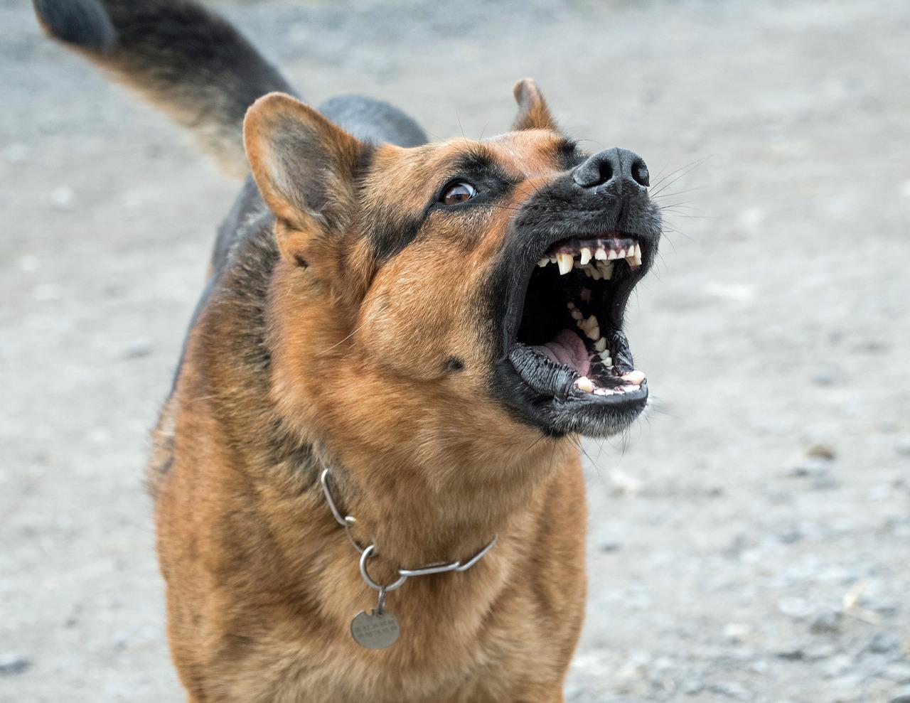 aggressive dogs Euthanization is not always the right solution we work with canine aggression evaluations which lead to problem resolution and or problem management.