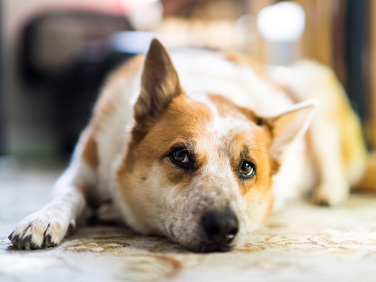 dog bone cancer - 800×500
