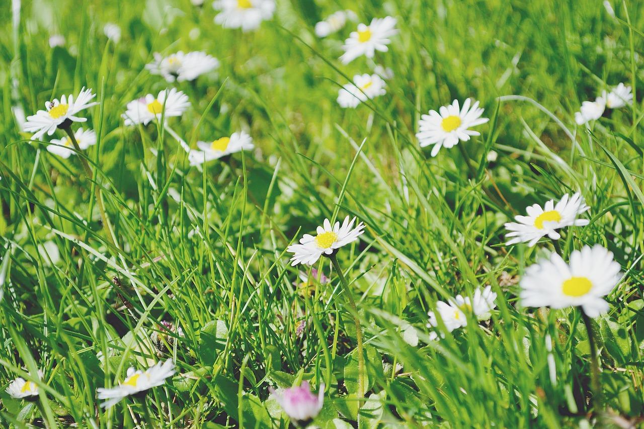 Daisy maisy flowers choice image flower wallpaper hd daisy maisy flowers choice image flower wallpaper hd daisy maisy flowers softwaremonsterfo daisy maisy flowers izmirmasajfo izmirmasajfo