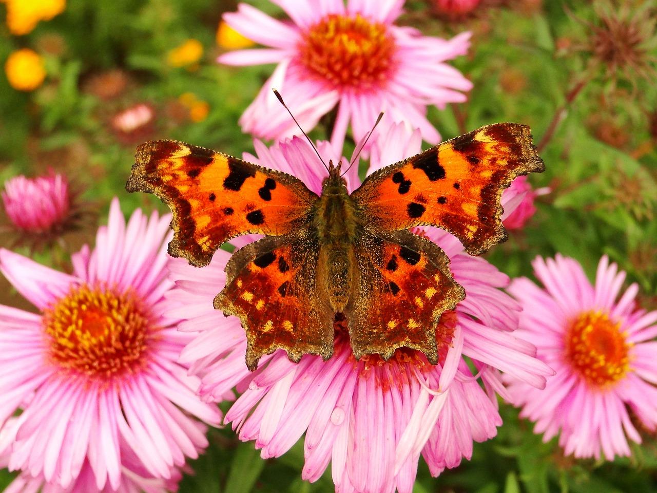 Лето картинки цветы бабочки, картинки
